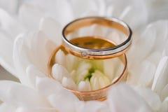 Anelli di oro per nozze sul fondo della luce morbida Fotografia Stock Libera da Diritti
