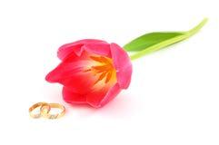 Anelli e tulipano di cerimonie nuziali Fotografia Stock