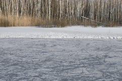 Anello del ghiaccio in foresta Fotografia Stock