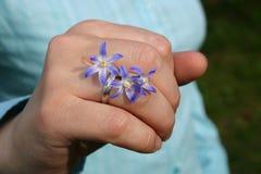 Anello di cerimonia nuziale con i fiori una primaverina Immagine Stock