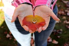 Anello di fidanzamento un giorno dell'autunno fotografia stock libera da diritti