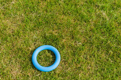 Anello di gomma Fotografia Stock
