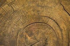 Anello di legno Fotografia Stock