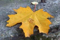 Anello-simbolo di impegno di amore Fotografia Stock