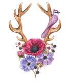 Anemonów poroże i kwiaty Obrazy Royalty Free