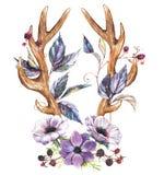 Anemonów poroże i kwiaty Zdjęcie Stock