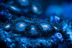 anemon arkivfoto