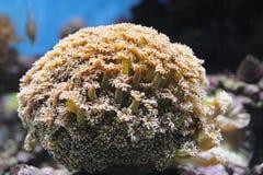 anemon fotografering för bildbyråer