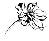 Anemon Delicat Watercolor Nice Flower Bouquet Stock Image