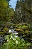 anemon kwitnie las zdjęcie royalty free