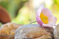 Anemon na kamieniu Zdjęcie Stock