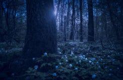 Anemona i en vårskog på natten arkivfoto