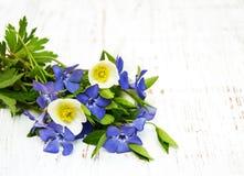 Anemone βιγκών και άνοιξη Στοκ εικόνα με δικαίωμα ελεύθερης χρήσης