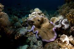 Anemone και ψάρια ξένιου χ/υ στη Ερυθρά Θάλασσα. Στοκ φωτογραφίες με δικαίωμα ελεύθερης χρήσης