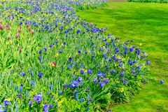 Anemone και daffodils πάροδος Στοκ φωτογραφία με δικαίωμα ελεύθερης χρήσης