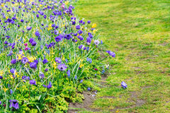 Anemone και daffodils πάροδος Στοκ Εικόνες