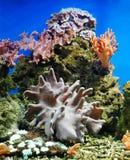 anemone στοκ εικόνα με δικαίωμα ελεύθερης χρήσης