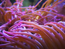 Anemone in Aquarium near Ruhpolding. royalty free stock photos