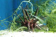 Underwater World Aquarium royalty free stock images