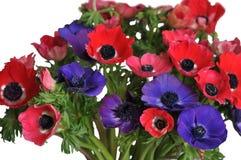 Anemone-Blumenstrauß Stockbilder