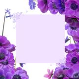 Anemone bouquet with frame Royalty Free Stock Photography