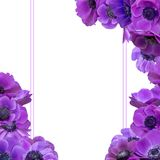 Anemone bouquet with frame Royalty Free Stock Images