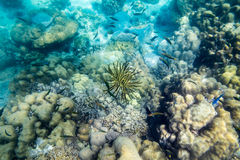 Anemone coral reef yellow black underwater Stock Images