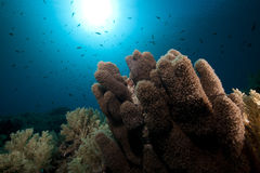 Anemone coral and tropical underwater life. Stock Image
