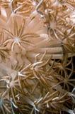 Anemone, corallo molle Immagini Stock Libere da Diritti