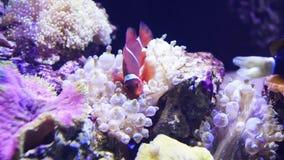 Anemone de mar video estoque
