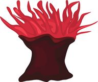Anemone de mar Fotos de Stock Royalty Free