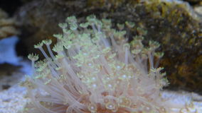 Anemone deep in the sea stock video footage