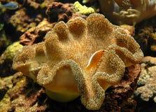 Anemone e pesci Immagine Stock Libera da Diritti