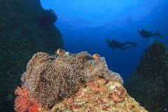 Anemone e subaquei Fotografia Stock Libera da Diritti