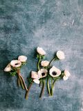 Anemone flat lay Royalty Free Stock Photography