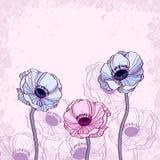 Anemone floral background  illustration Royalty Free Stock Image