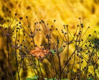 Anemone flower Stock Photography