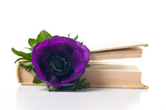 Anemone flower in an old book Stock Photos