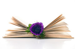 Anemone flower in an old book Royalty Free Stock Image