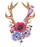 Anemone flowers and antlers. Beautiful illustration with the watercolor anemone flowers, blackberries, bird and antlers. Floral composition in boho style with Royalty Free Illustration