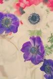 Anemone Flowers blu Fotografia Stock