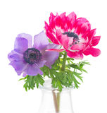 Anemone flowers Royalty Free Stock Images