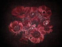 Anemone flowers Stock Photos