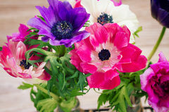 Anemone flowers Royalty Free Stock Photography