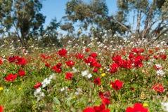 Anemone livellato field2 della terra fotografia stock