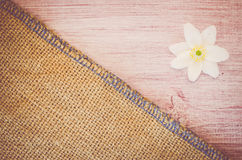 anemone nemorosa flower on a pastel tinted wood and burlap backg Stock Photo