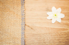 Anemone nemorosa flower on a pastel tinted wood and burlap backg Stock Photography