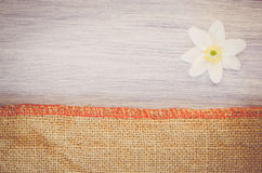 anemone nemorosa flower on a pastel tinted wood and burlap backg Stock Images