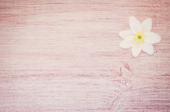 anemone nemorosa flower on a pastel tinted wood surface Stock Photos