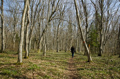 Anemone path. Woman walking on a path in a bright forest Stock Photos